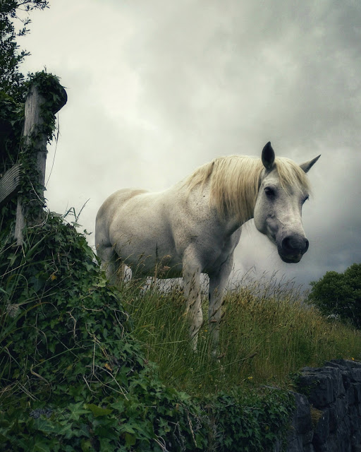 horse, in the grass, nature,
