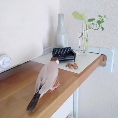 我が家の文鳥さん