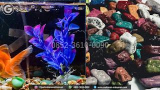 coklat kerikil aquarium | +62 852-3610-0090