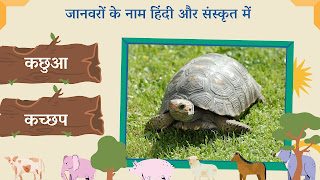 turtle name in sanskrit and hindi with images