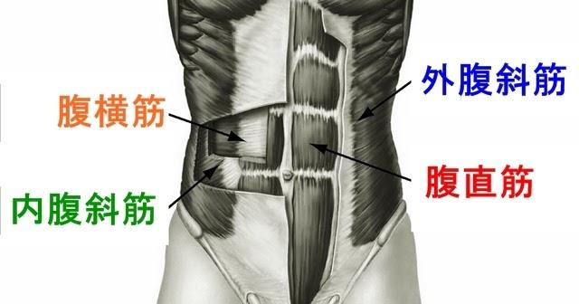 腹筋の筋トレメニュー|自宅・ジムでの腹直筋・内腹斜筋・外腹斜筋の部位別の鍛え方