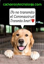 cachorros tecnologia no transmite corona virus covid-19