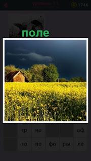 поле с желтыми цветами и вдали стоит обычный небольшой домик