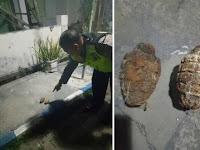 Pria Madiun Temukan Granat Nanas di Pekarangan Rumah