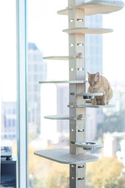 elevation II Contempo Cat