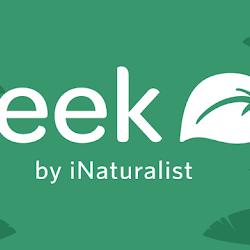 Seek, la app para identificar plantas y animales