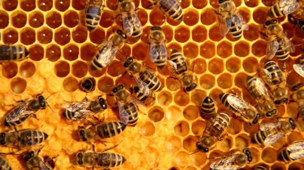 Celdas hexagonales, cera, miel, cría y abejas.