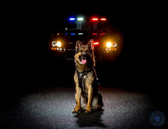 Vancouver Police Canine Unit Released Their 2019 Charity Calendar, And The Photos Are Awesome