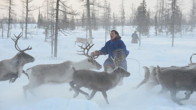 Un pastor de renos sobrevive 16 días sin comida en medio de una tormenta de nieve en Siberia