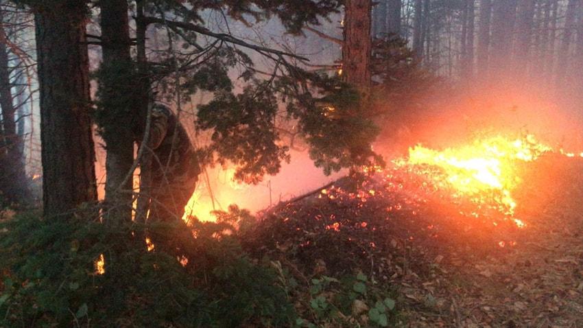 Aydos Ormanı'nda çıkan yangında kundaklama şüphesi!