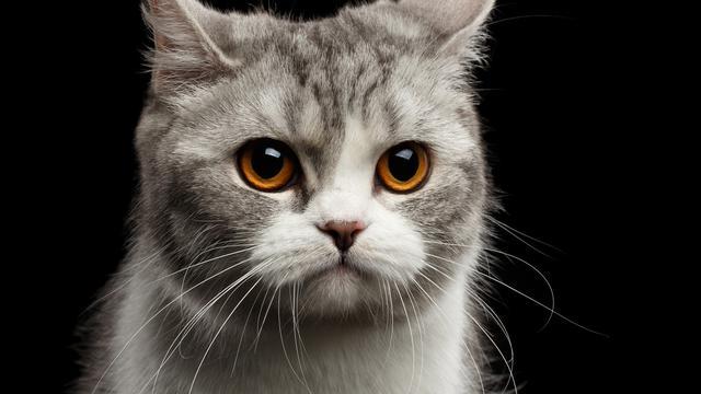 Penyakit-penyakit Yang Biasa Menyerang Kucing Peliharaan