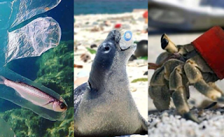 Dampak Sampah Plastik