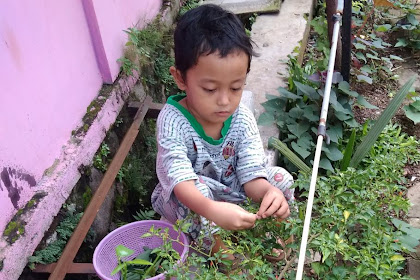 Day 25: Panen di Kebun Minimalis