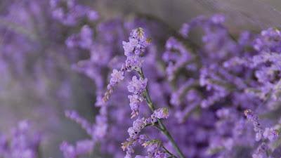 Free purple flowers wallpaper