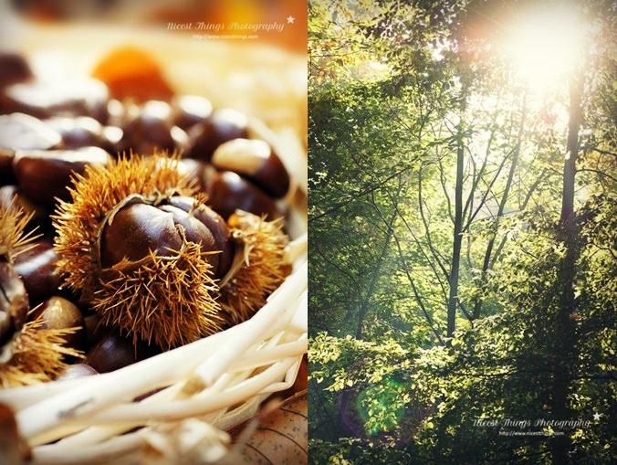 Maronen im Backofen rösten Esskastanien Maroni Rezept Herbstwald