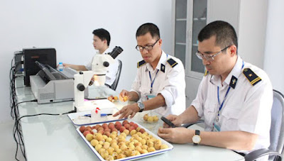 quy trình kiểm dịch thực vật trái cây 2019