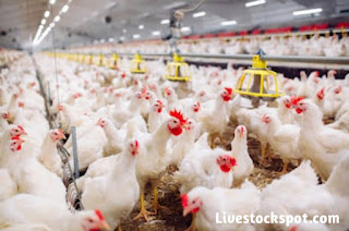 Best Guide On How To Start A Lucrative Poultry Farming Business