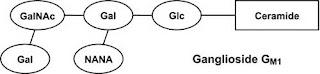 ganglioside GM1