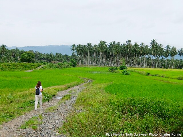 Nature tour sightseeing and birding in North Sulawesi