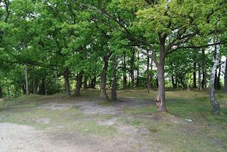 Ein lichtes Plateu mit vereinzelten Bäumen