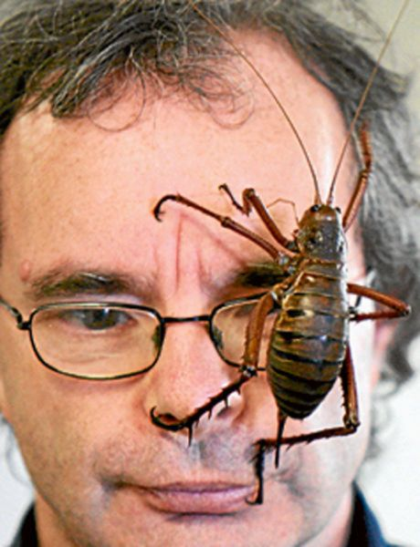Bookmarks 100 : Some Of The Worlds Biggest Bugs - Bookmarks100