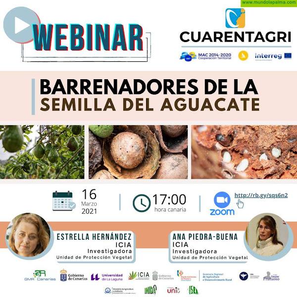 El ICIA imparte hoy un seminario virtual sobre barrenadores de la semilla del aguacate