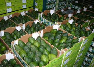 Авокадо в ящика оптом - цена первого поставщика