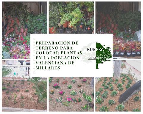 Preparación de terreno y colocación de plantas, por Ruepra Jardinería