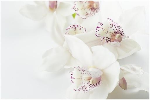 Como regar uma orquídea