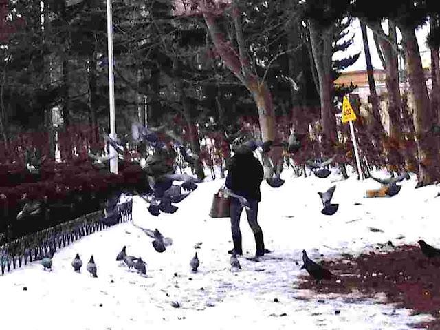 鳥にエサをやる女性。