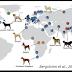 Cientistas encontram que cães já existiam desde a última Era do Gelo