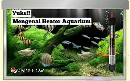 Apa Itu Heater Ini Fungsi Cara Menggunakan Heater Aquarium Jejaksemut