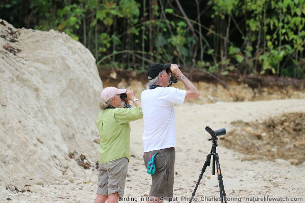 Guided birdwatching tour with Charles Roring