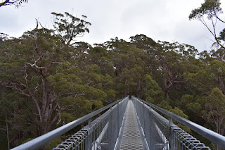 Valley of the Giants | Noralup Tree Top Walk