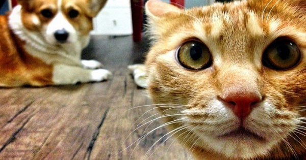 60 lakh allocated for dogs and cats