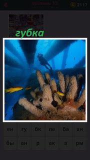 655 слов под водой растет губка и на верху аквалангист плывет 13 уровень