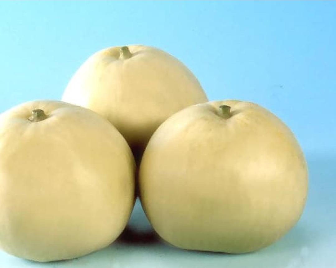 Buruan Beli! Benih Bibit Buah Melon Apel Oriental 5 benih Kota Bekasi #bibit buah buahan