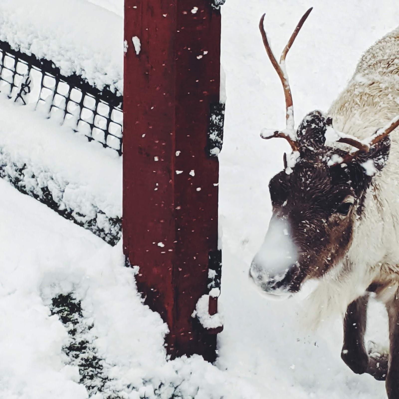 cairngorms reindeer centre aviemore liquidgrain liquid grain