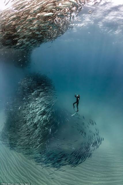 !!MARAVILLAS DE MEXICO!! Es captado un Tornado marino Formado por un banco de peces