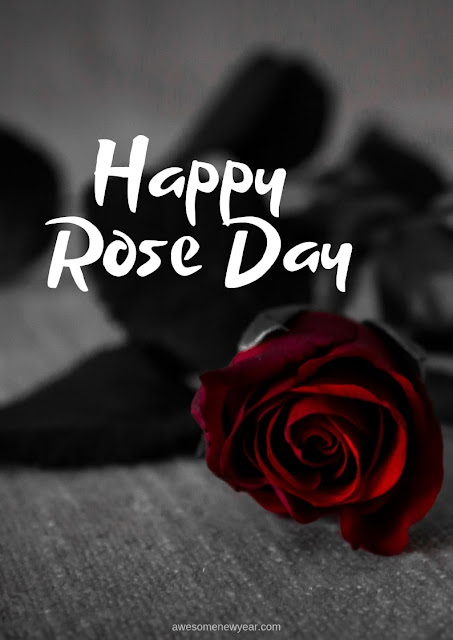 Happy Rose Day Photos