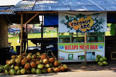 Kelapa Muda BKR, menjual kelapa Camani