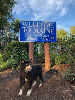 Dog at Maine visitors center
