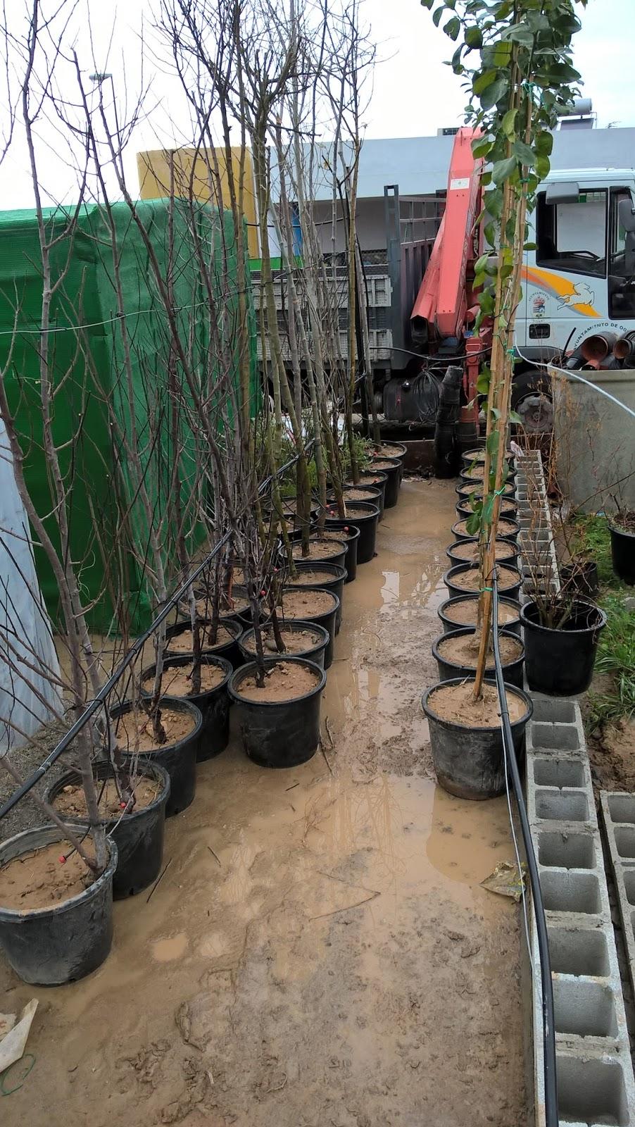 Parques y jardines de ogijares construcci n del vivero for Proyecto de vivero municipal