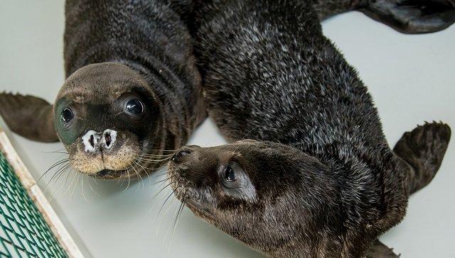 Νεογέννητη φώκια που εντοπίσθηκε στην Αργολίδα αναρρώνει με παρέα στο Αττικό Ζωολογικό Πάρκο