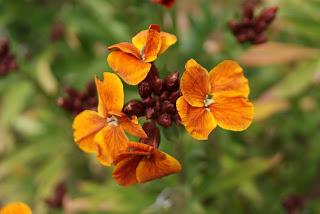 Flors de pensament per Teresa Grau Ros