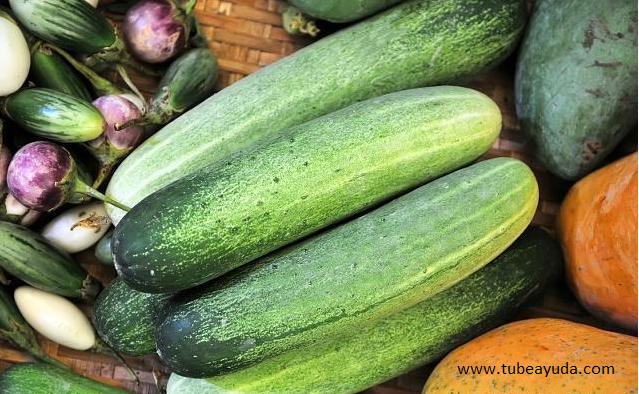 Los pepinos son ricos en enzimas biológicamente activas y ácidos de frutas. Estas dos sustancias pueden promover el metabolismo del cuerpo.