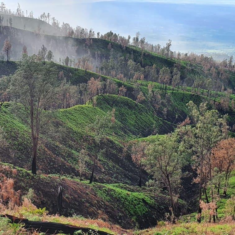 Mulai Oktober 2020 diberlakukan pemesanan tiket online masuk ke Kawah Ijen Banyuwangi