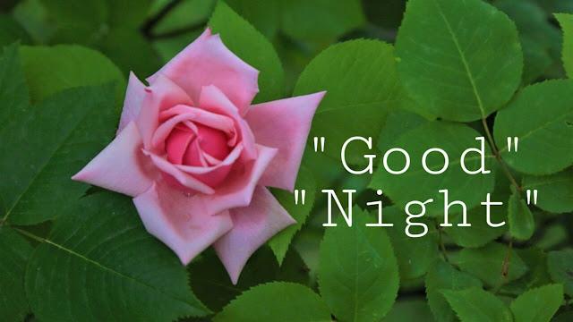 Good Night Rose Image Hd