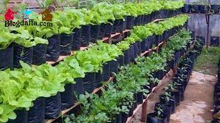 Ide Bisnis Pertanian Rumahan Modal dengan Kecil