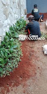Jasa Tukang Taman Dibintaro